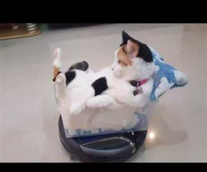 the roomba riding cat Funny Video