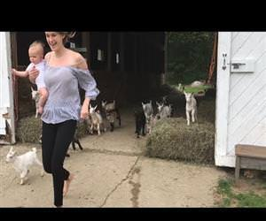 the running of the goats Funny Video