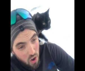 this cat loves to go sledding Funny Video