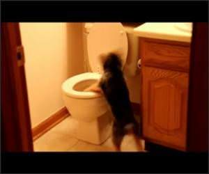 This Dog Hates Toilets Video