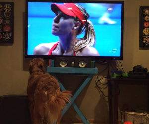 this dog really loves tennis Funny Video