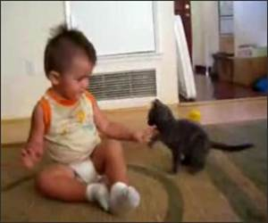 Toddler Vs Kitten Funny Video