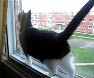 Trapped Cat Funny Video