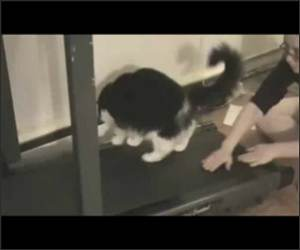 Treadmill Cats Funny Video