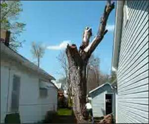 Proper Tree Removal Funny Video