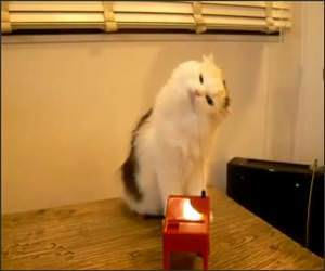 Very Confused Cat Funny Video