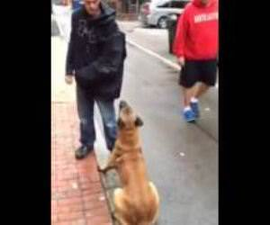 Well Trained attack dog Funny Video