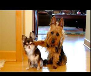 which dog pooped in the kitchen Funny Video