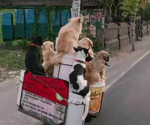taking the dogs for a ride