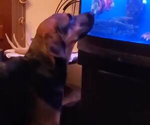 gimme that fish