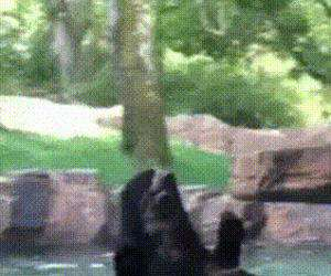 jumping with the bear