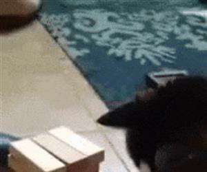 this cat hates jenga