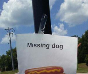 Missing a dog