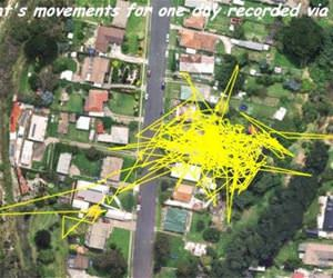 a cats movements tracked funny picture