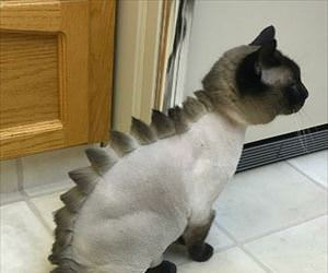 awesome mohawk