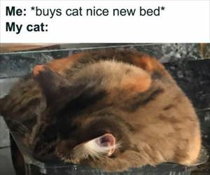 buys a new nice bed