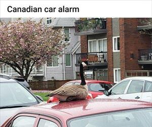 canadian car alarm