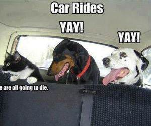 Car Rides funny picture