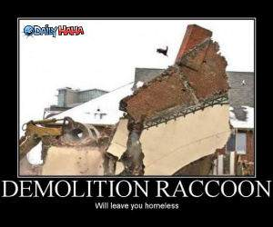 Demolition Raccoon funny picture