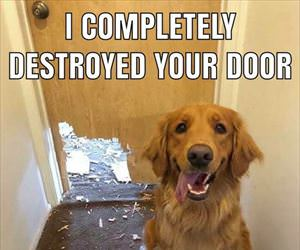 destroyed your door