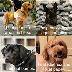 different kinds of dogs ... 2