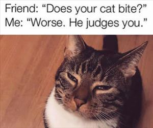 does your cat bite