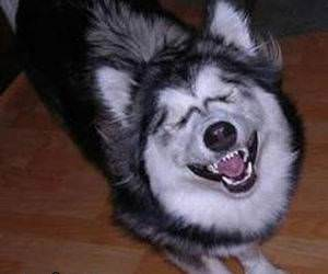 Dog laughing his ass off.