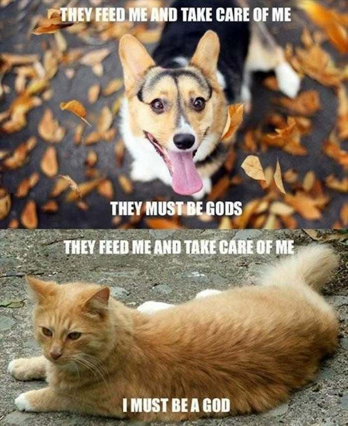 dogs vs cats ... 2