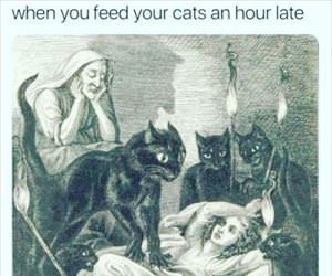 feed the cats late