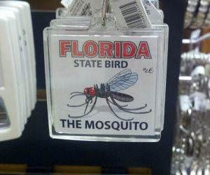 Florida State Bird funny picture
