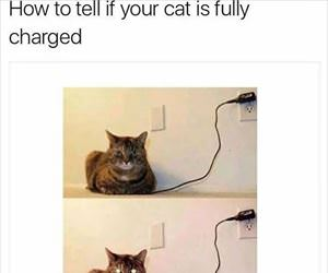 full charged cat