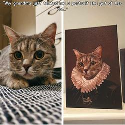 got a portrait of my cat