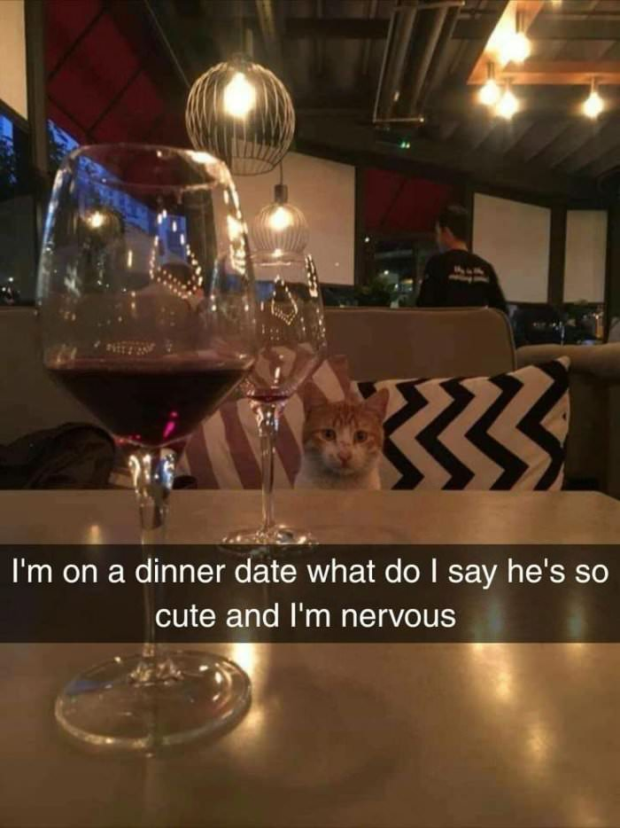 i am on a dinner date