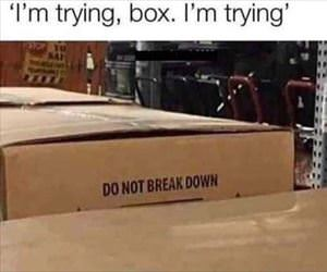 i am trying box