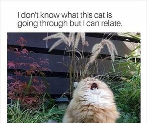 i can relate with this cat