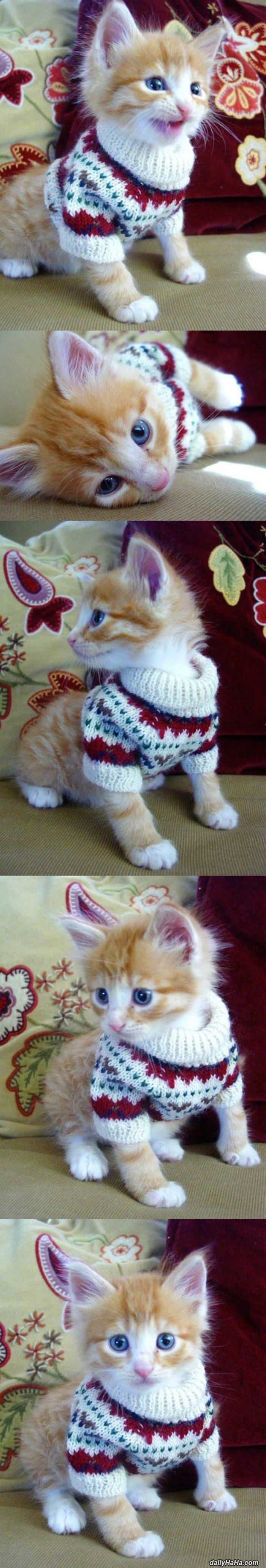 kitten sweater funny picture
