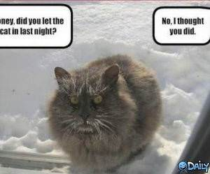 Cold Cat funny picture