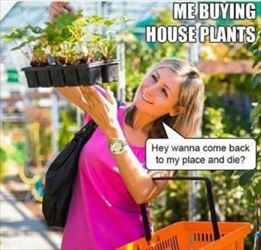 me buying house plants