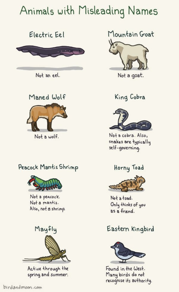 Animal Names funny picture