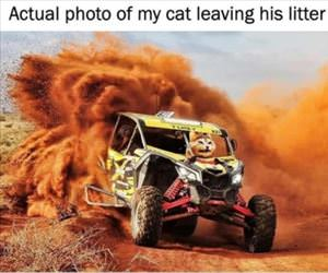 my cat leaving the litter box
