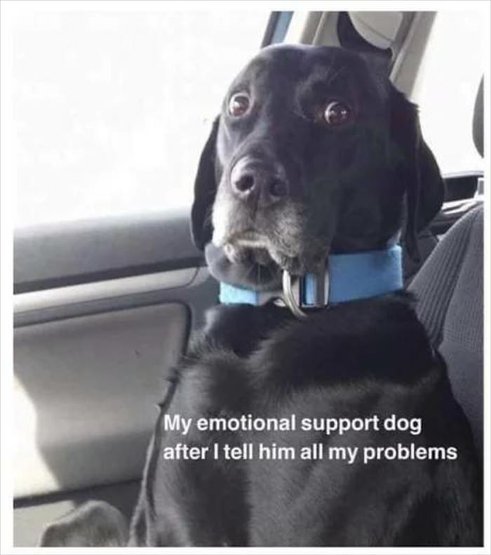 my emotional support dog