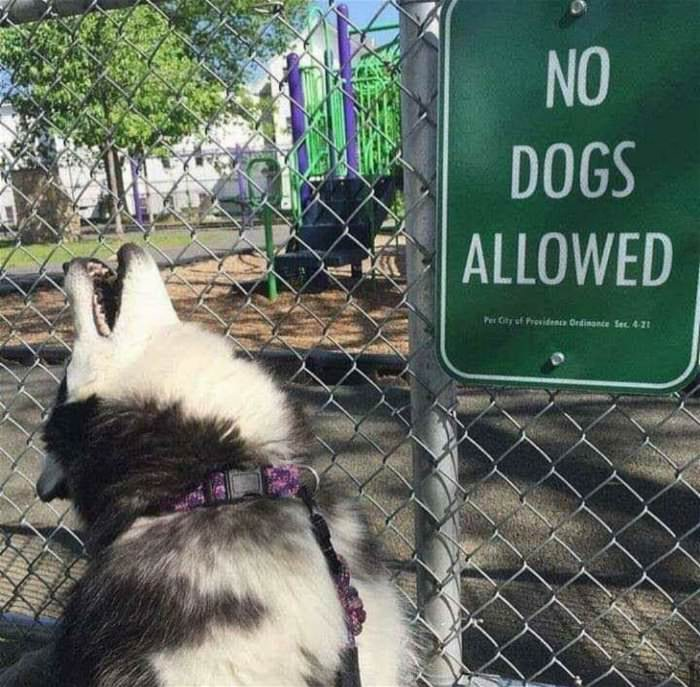 no dogs allowed ... 2
