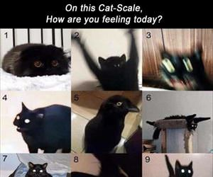 on this cat scale