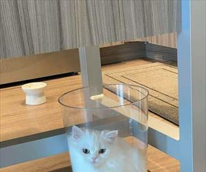 one glass of cat