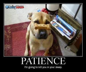 Patience Dog Funny Picture
