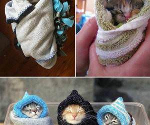 pets staying warm funny picture