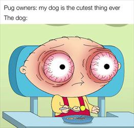 pug owners