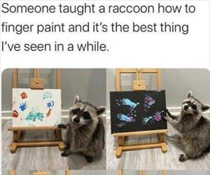 racoon finger paints