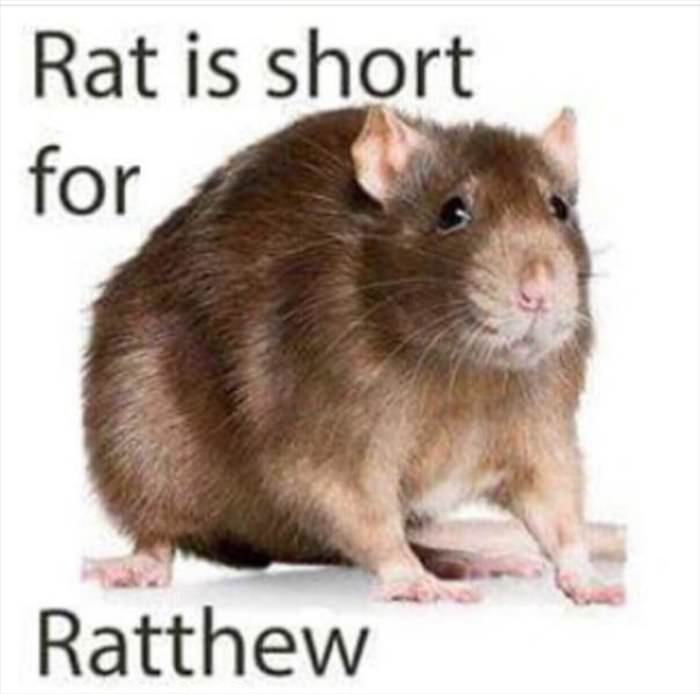rat is my nickname