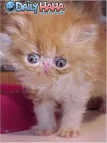 funny retarded animals pictures to pin on pinterest